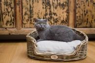 Sortiment zboží pro kočky (Petamour.cz)